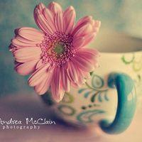 微信头像图片大全花朵唯美图片精选 今天的你比昨天更坚强
