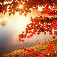 有些凄凉的关于秋�斓纳烁兴邓� 心随着秋风萧瑟飘摇