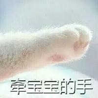 比较可爱的猫爪牵手表情包全套 签宝宝的