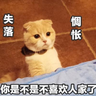 2018最新搞笑动物头像带字好玩 我是一只会说话的可爱猫咪