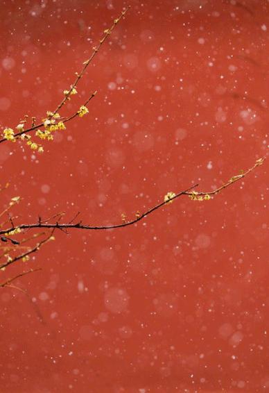 故宫唯美手机壁纸下雪天 北京下雪故宫美景图片大全