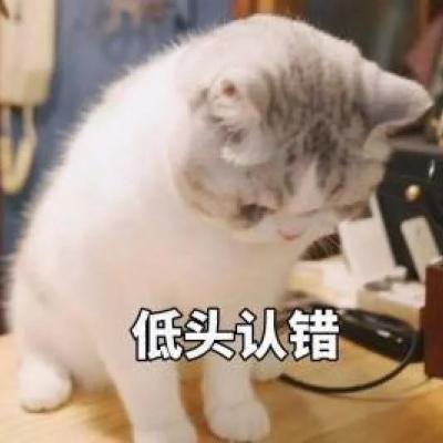 微信猫咪头像可爱大全带字 等一个你等一个爱情