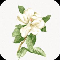 茉莉转appv1.0.1 正版