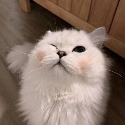 萌化少女心可爱的动物猫咪头像 都能想得通没人会在夜里难过