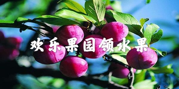 欢乐果园领水果
