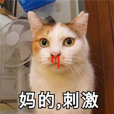 猫咪最可爱的搞笑又带有猥琐的表情包 失去一个人最快的方式就是靠得太近