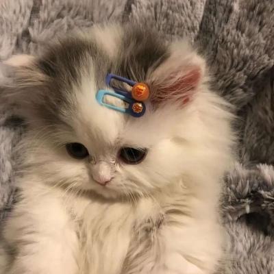 2021超级可爱的萌萌猫咪头像大全