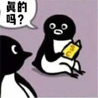 suica企鹅可爱的微信表情包大全-云奇网