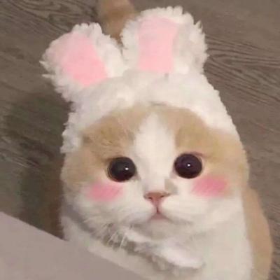 2021超级可爱的萌萌猫咪头像 最冷的日子看到最暖的一束光