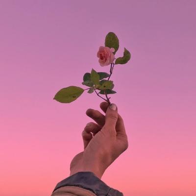 微信风景头像唯美伤感 最新好看的花朵头像