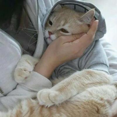 可爱猫咪微信头像大全 抱猫咪的头像高清呆萌