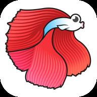 斗鱼快讯appv1.0.0 最新版