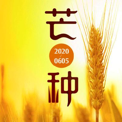 2020芒种picture高清唯美 芒种节气picture大全