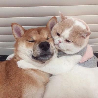 动物情侣头像猫狗一对 非常可爱的猫狗情侣头像大全