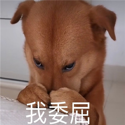 狗狗沙雕表情图片搞笑_关于狗的聊天表情包2020