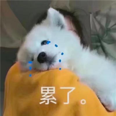 狗狗沙雕表情图片搞笑_关于狗的聊天表情包2020-豪情云天 - 豪情云天网