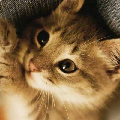 高清可爱小动物微信QQ头像 高颜值萌宠乖乖好看头像