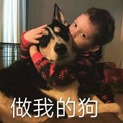 一条戏精狗狗的表情包合集 狗狗�车癖砬�
