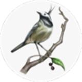 画个故事游戏v1.0.2 最新版