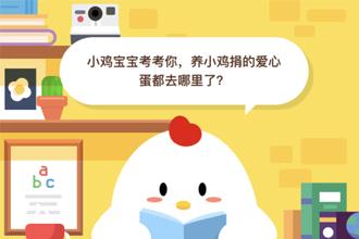 养小鸡捐的爱心蛋都去哪里了?