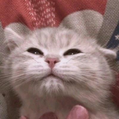 搞怪可爱的萌宠动物微信头像 今天很乖想你也没有找你