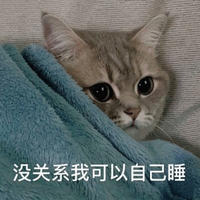 可爱猫咪最新搞笑聊天表情包 不要高估你和任何人的关系