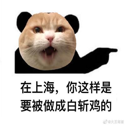 小猫咪地方特色搞笑的表情包 跋山涉水也不会辜负你