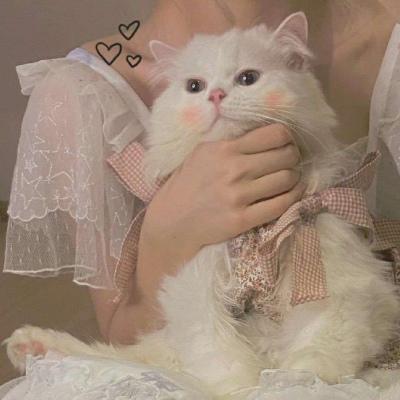 仙女与猫猫的好看微信精选头像 其实就是一直在心里
