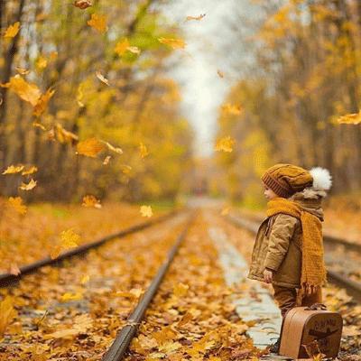 秋意渐浓的枫叶唯美图片 秋天应该很好我如约而至