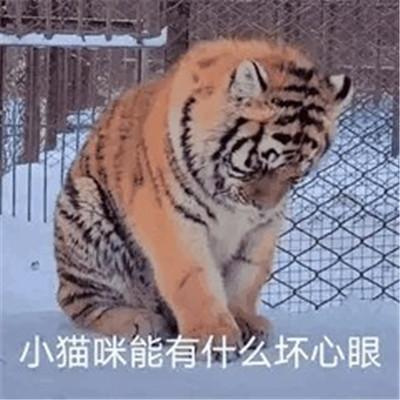 抖音超火小猫咪能有什么坏心眼表情包大全