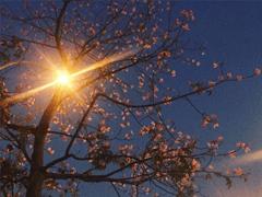 敲可爱的温柔到骨子里的神仙个性网名 月色中的栀子花香