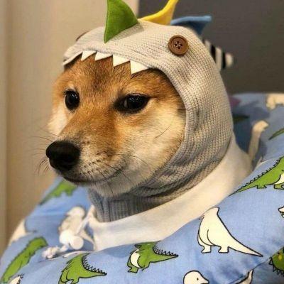 最新超级可爱又很萌的柴犬头像大全大全-云奇网