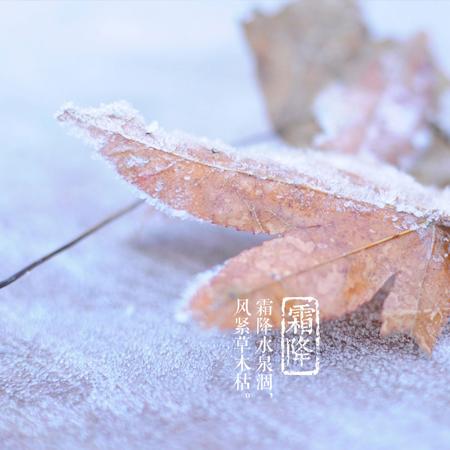 2021霜降节气唯美又好看的图片 霜降节气发朋友圈的好看的素材