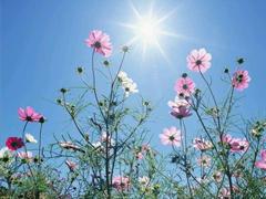 阳光跟暖内心很温柔的文案 阳光正好微风不燥的说说