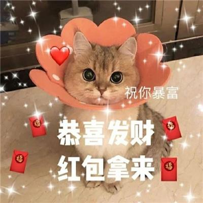 超萌新年猫咪拜年表情包大全-云奇网