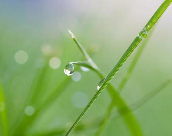 二十四节气雨水的早安说说大全-云奇网