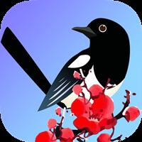 喜鹊快讯appv1.0 正式版
