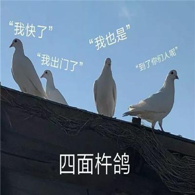 抖音热门鸽鸽系列实用表情包大全