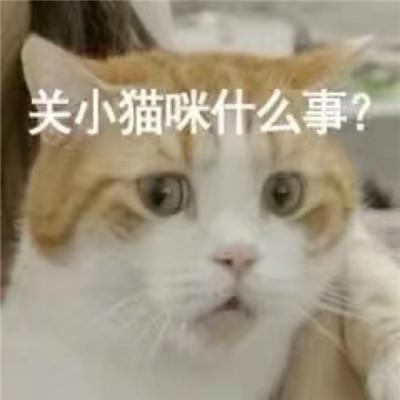 2021可爱沙雕小猫咪表情包合集 小猫咪才是永远的神