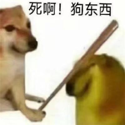 一组沙雕又可爱的柴犬cheems表情包大全-云奇网