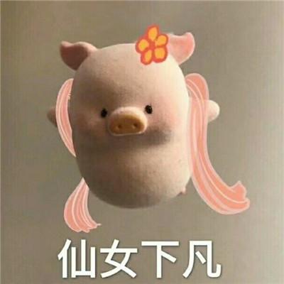 微信一只粉色猪猪表情包超可爱大全