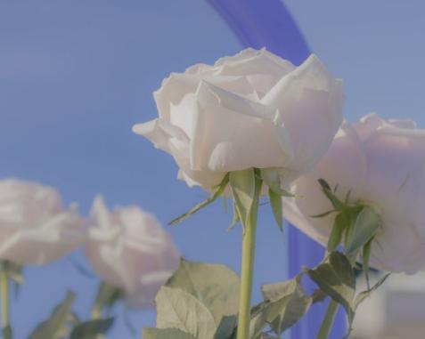 五四青年节的爱国签名大全-云奇网