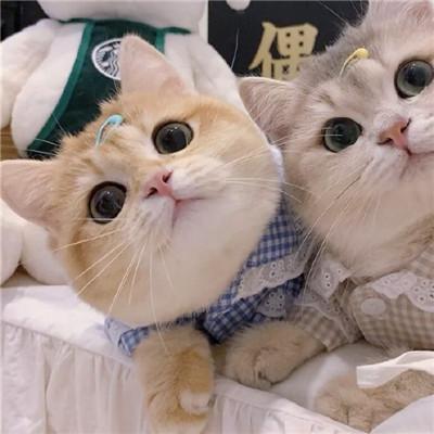 2021最新版猫咪情侣头像一对两张可爱大全