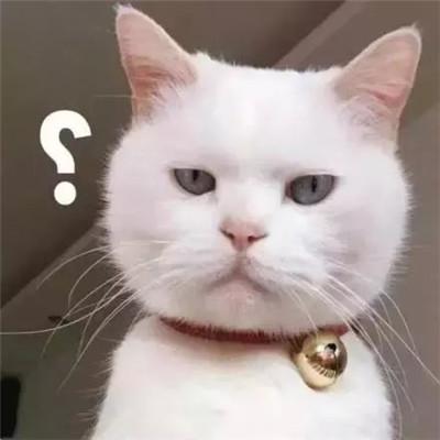一脸问号的聊天表情包 2021最新版的问号表情图片