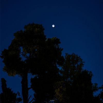 月光下的伤感景物背景图 爱了时光却负了将来