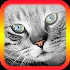 猫翻译模拟v5.5 安卓版