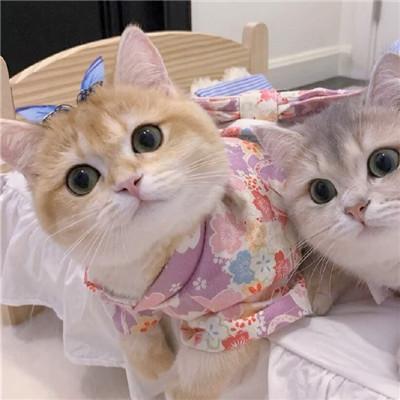 2021最新版猫咪情侣头像一对两张可爱 一生太长了总要有个人作伴