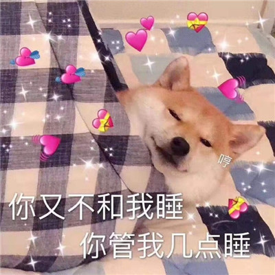 精选小柴犬的可爱聊天表情包大全-云奇网