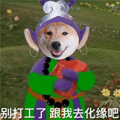 柴犬版新西游记搞笑表情包大全-云奇网