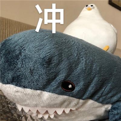 oddy魔性海鸥微信聊天表情包大全-云奇网
